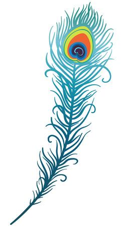 piuma di pavone: illustrazione della bella penna di pavone su sfondo bianco (vettoriale)