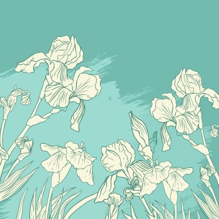 dessin fleur: Iris dessin de fleur sur fond d'olive
