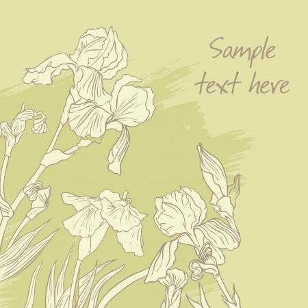 dessin fleur: Iris dessin de fleur sur fond d'olive. Vector illustration Illustration