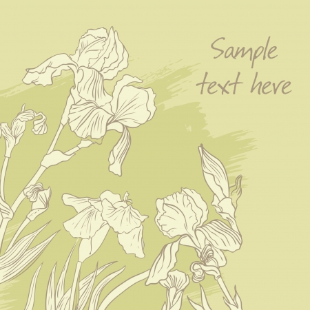 Iris flower drawing on olive background. Vector illustration Vector