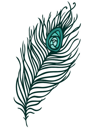 illustration of beautiful peacock feather on a white background (vector)  Vector