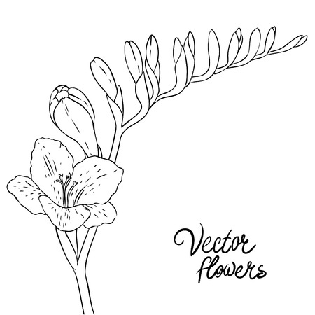 Vintage hand-drawing background with flowers. Vector illustration isolated.