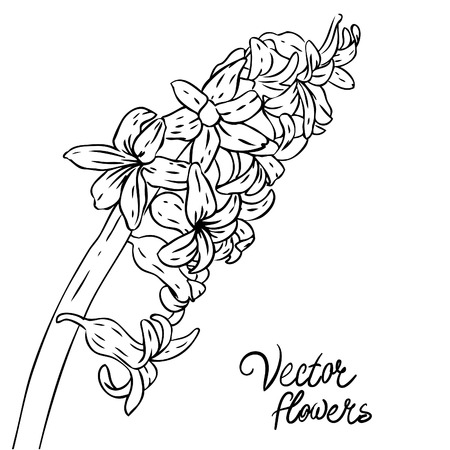 Vintage hand-drawing background with flowers. Vector illustration isolated.  Vector