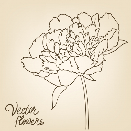 botanical drawing: Vintage hand-drawing background with flowers. Vector illustration isolated.