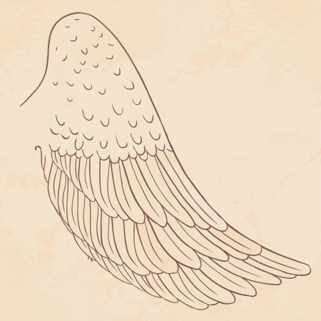 gothic angel: wing illustration Drawn by hand.
