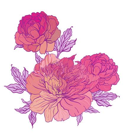 Beautiful peony bouquet design on beige background. Hand drawn vector illustration. Illustration