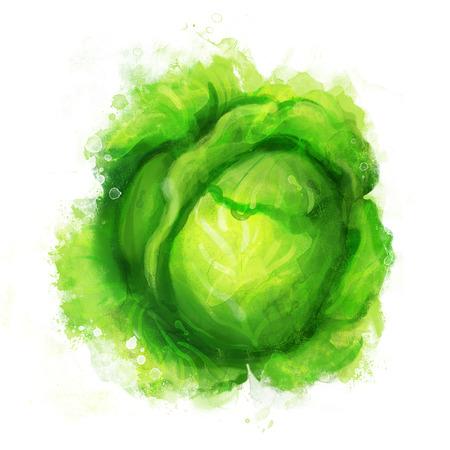 repollo: Verduras Acuarela: Col aislada en blanco Vectores