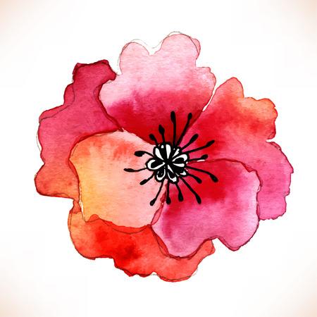 De rode bloem van de waterverf Papaver over witte kronkelen. Vector illustratie. Stock Illustratie