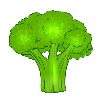 broccoli salad: Vector vegetables: broccoli isolated on white Illustration