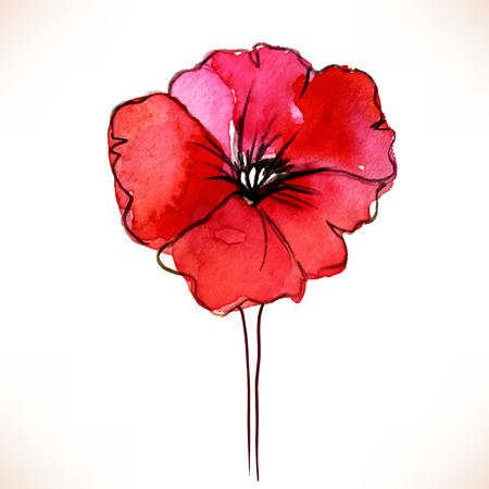 single flower: Red Watercolor Poppy flower over white backgound. Vector illustration. Illustration