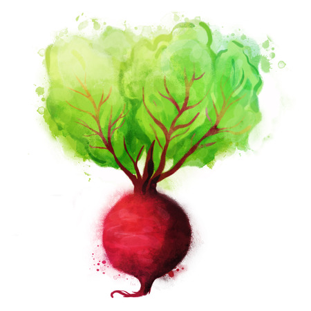 beet root: Watercolor vector vegetables set: Beetroot on white Illustration