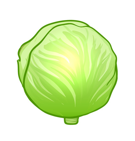 cabbage: Watercolor vegetables: cabbage isolated on white