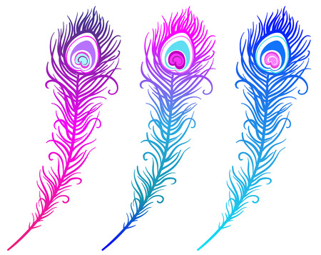 illustration of colorful peacock feather on a white background (vector) Illustration