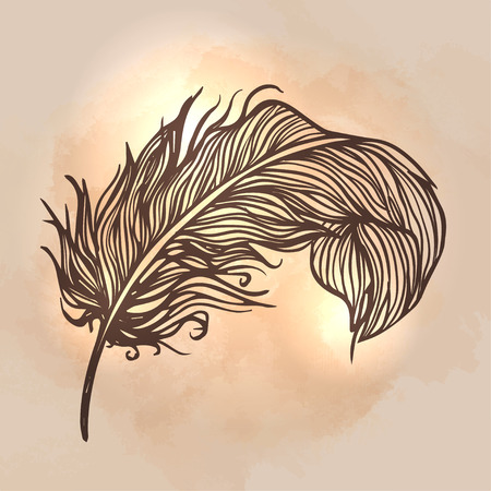 black feather: Shiny gold feather over dark background Illustration
