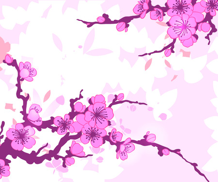 cherry blossom: Branch of Sakura vector illustration