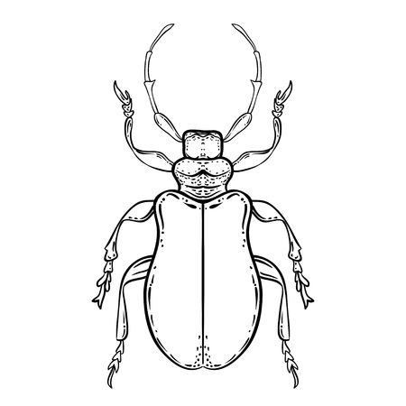 Hand drawn bug in vintage style. Beetles vector illustration isolated on white background. Retro tattoo design, astrology, alchemy, magic symbol.