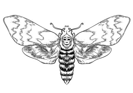 Black and white decorative vector illustration of moth isolated on white. Tattoo design. Coloring book for adults. Nature, spirituality, occultism, alchemy, magic concept.