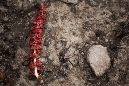 red branch with stones on ground. High contrast.