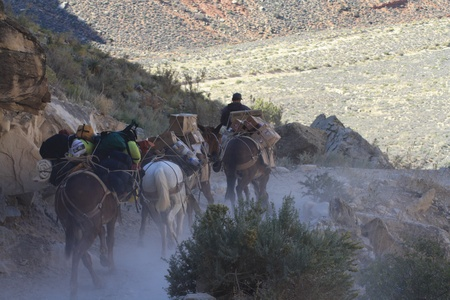 mule train: Mule Train in Supai, Grand Canyon