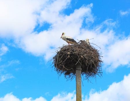 flew: Storks flew