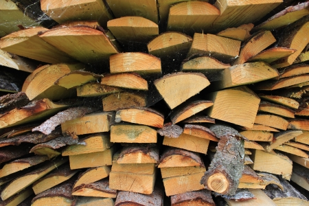 various wood firewood stacked in a pile Stock Photo - 20954059