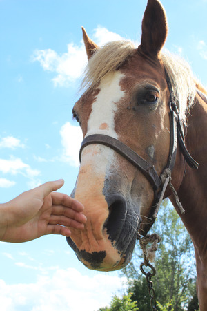 Rankiniai glosto arkliai