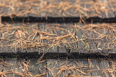 close-up of an old wooden roof with fallen pine needles. Stockfoto