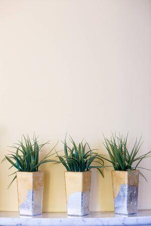 three houseplants in decorative pots on beige background Фото со стока
