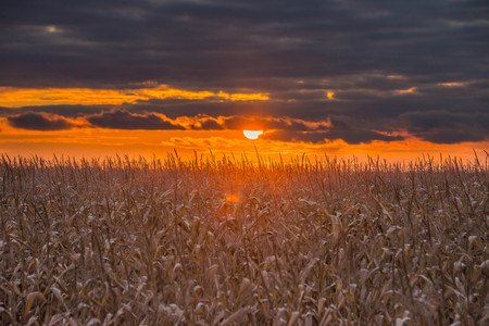 beautiful sunset on the lake nature in corn