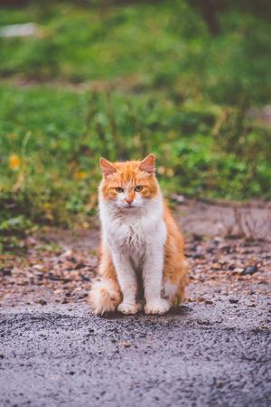 sad, homeless, red cat in the rain