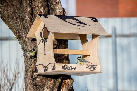 feeder for birds, titmouses eating from bird feeders in winter Reklamní fotografie