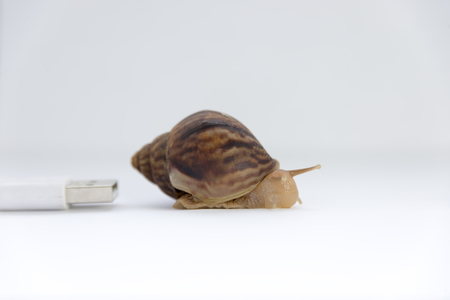 concept of low speed, snails and computer wires, speed in progress Reklamní fotografie