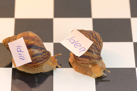 snails and idea, the concept of slow thought Stok Fotoğraf