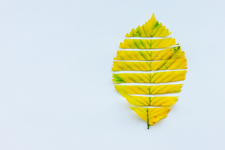 autumn leaves on a white background. copy space