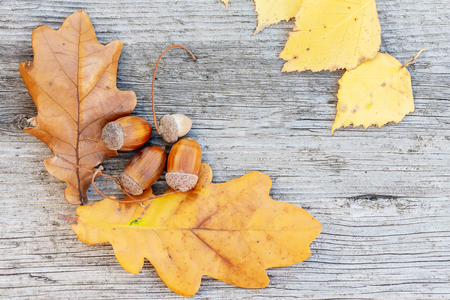 acorns and oak leaves on wooden background. Autumn still life. Copy space.