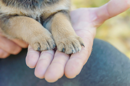 puppy paws on a mans hand. animal shelter. puppy adoption Stok Fotoğraf