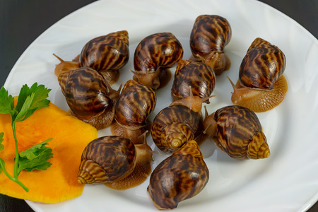 grape snails, akhatina, on a plate, as crude food, a rawism and as a delicious dish Stock Photo