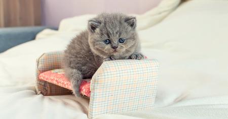 little kitten plays on igrushechno sofa, a portrait of a gray kitten, selective focus