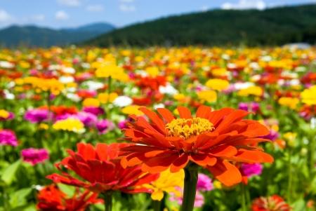 꽃송이 꽃 스톡 콘텐츠