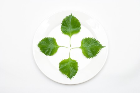 Leaf on the plate photo