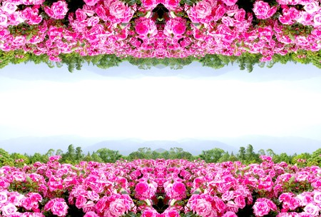 pink wall paper: Rose flower frame