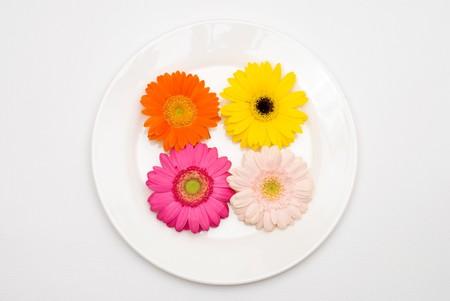 barberton daisy: Barberton daisy on the plate Stock Photo