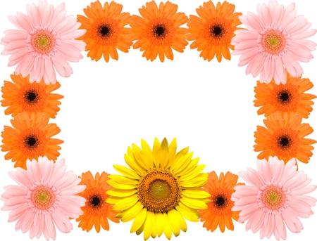 barberton daisy: Sunflower and Barberton daisy frame