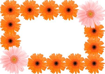 barberton daisy: Barberton daisy frame Stock Photo