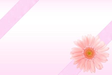 barberton daisy: Frame of the ribbon with Barberton daisy Stock Photo