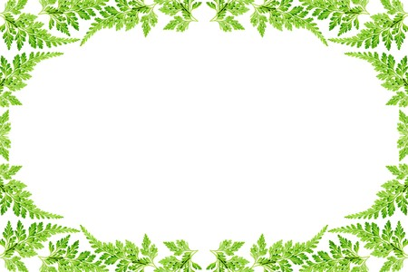 art processing: Green flame of the fern leaves