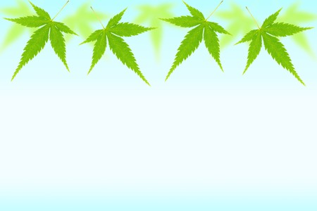 gradation: Background of the maple leaves and gradation Stock Photo