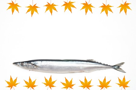 Saury with Colored maple picture photo