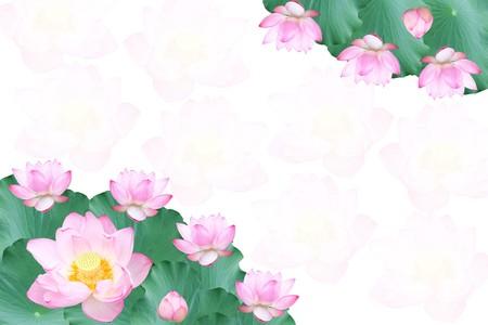 蓮の花と葉のフレーム 写真素材