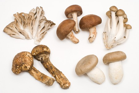 Various mushrooms on a white background